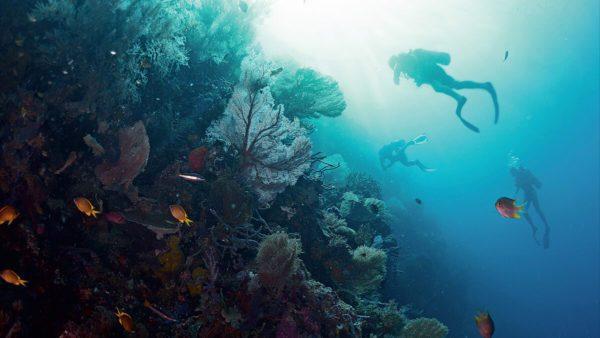 Dive Guide / Divemaster