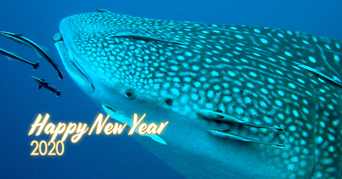 Member Diving wishes everyone a Happy New Year 2020!