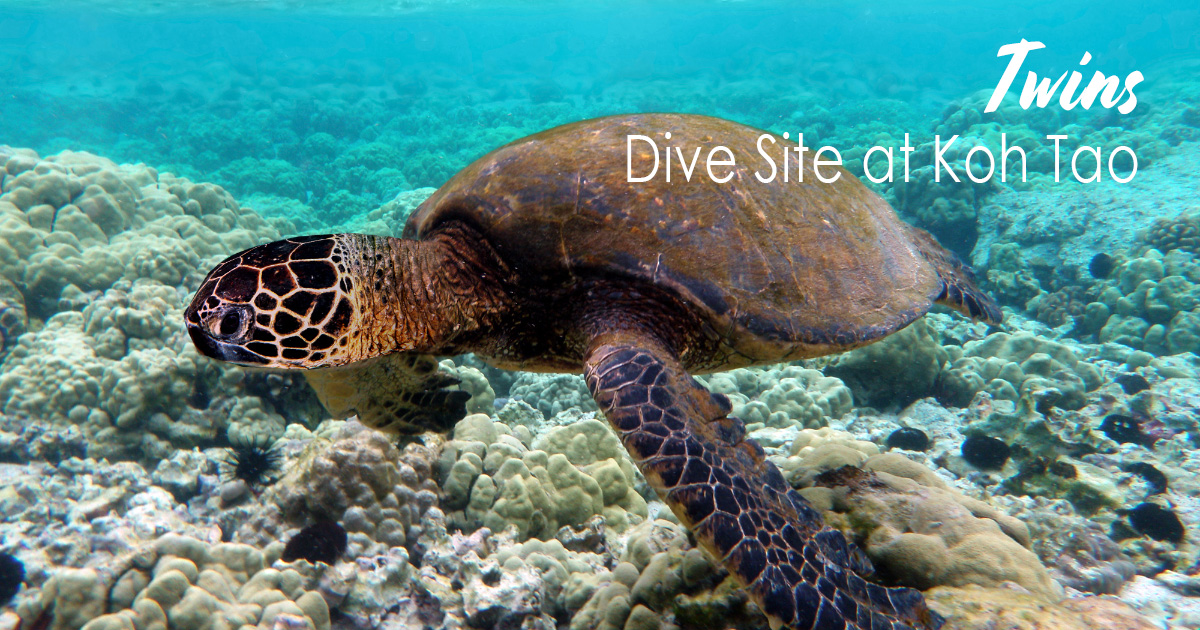 Twins – easy but always a great divesite