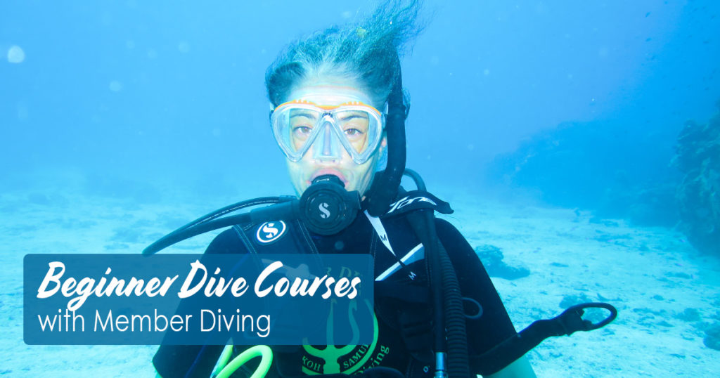 Beginner Dive Courses with Member Diving