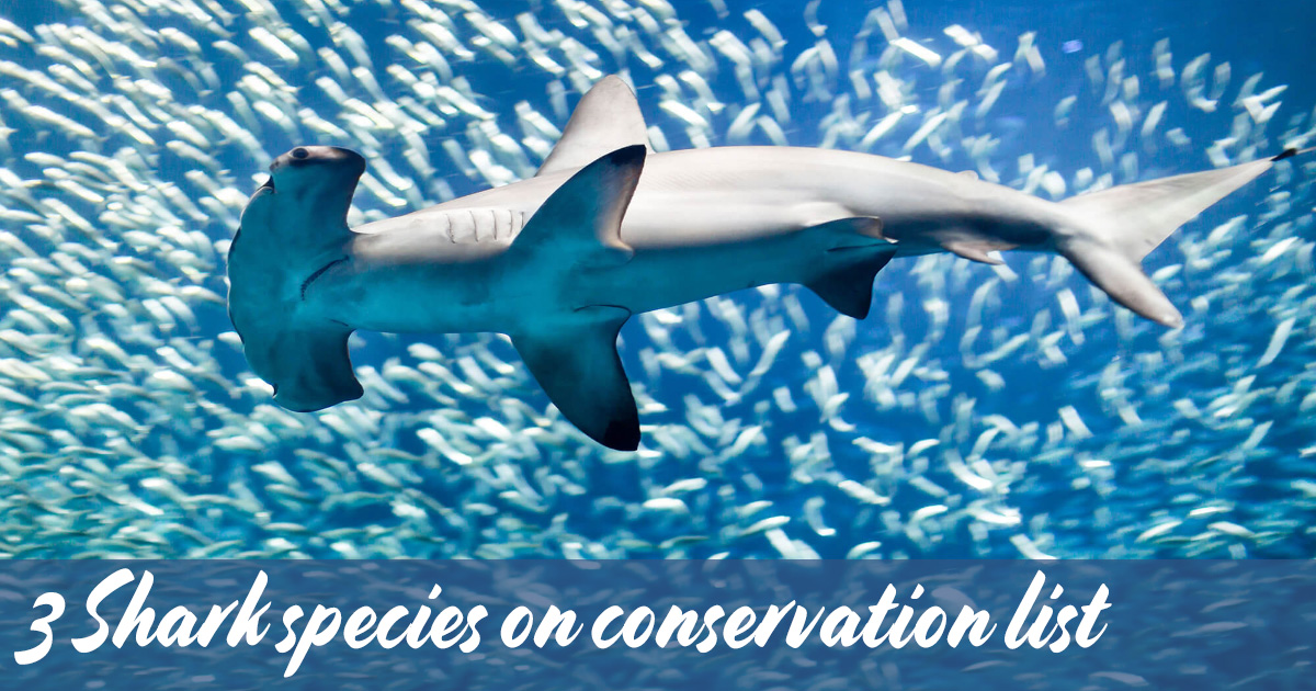 Convention on the Conservation of Migratory Species of Wild Animals 2020
